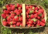 strawberries-602500__340